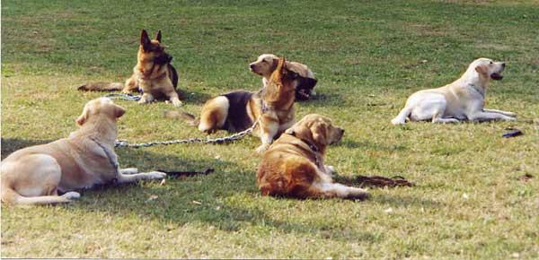Educazione resta ti presento il cane for Educazione cane