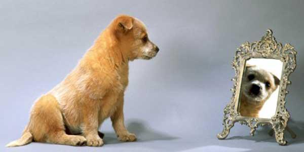 Educazione seduto ti presento il cane for Educazione cane
