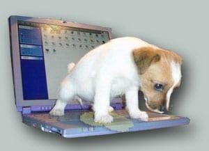Cuccioli E Pipì Ti Presento Il Cane