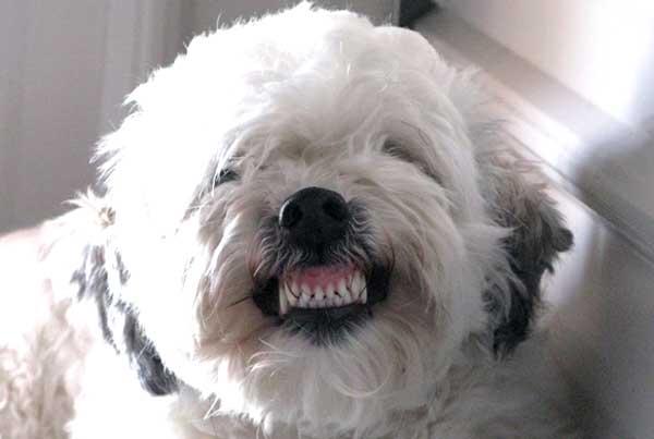 La Dentatura Del Cane Ti Presento Il Cane