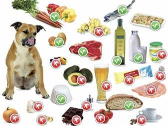 alimentazione casalinga cane