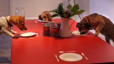 Il cane in visita a casa di un collega ti presento for Cani giocherelloni