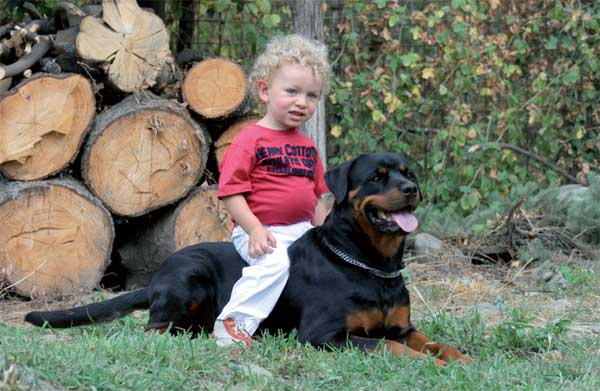 Il Vero Standard Del Rottweiler Ti Presento Il Cane
