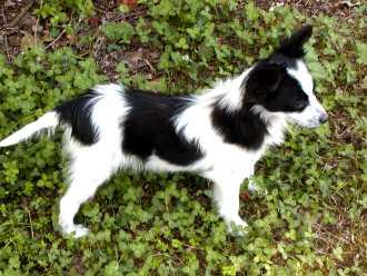 Piccolo bello non troppo piccolo meglio ti presento - Portare il cane al canile ...
