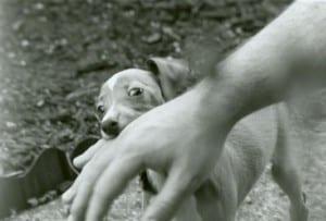 Aiuto Mi Morde Ti Presento Il Cane