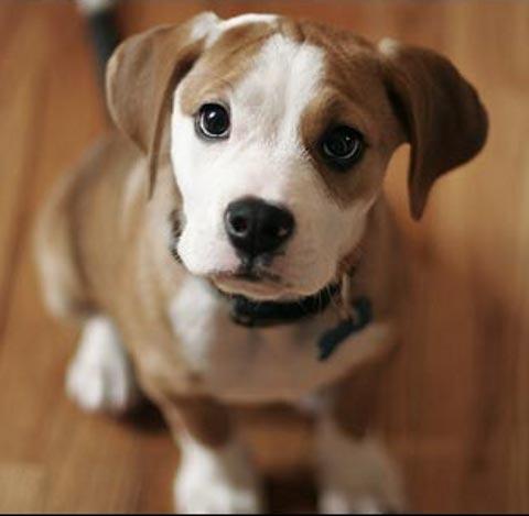 Razze meticce al rifugio i cani da topi ti presento for Cani da tenere in casa