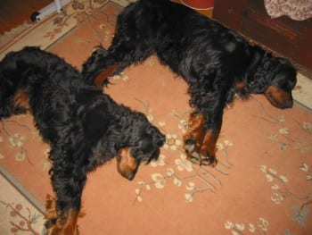I cani da caccia in canile ti presento il cane - Portare il cane al canile ...