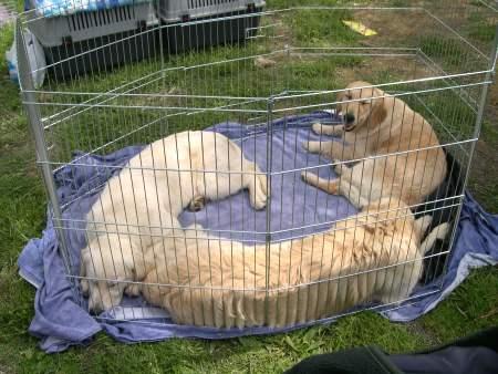 L 39 oggetto misterioso ovvero il recinto ti presento il for Recinto per cani taglia grande