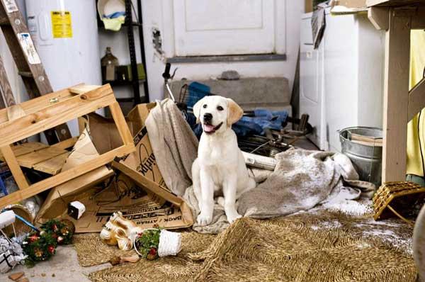 Il Mio Cane Mi Fa I Dispetti Ti Presento Il Cane