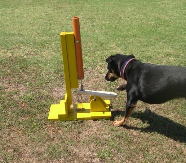 I giochi di attivazione mentale ti presento il cane for Cucce cani fai da te