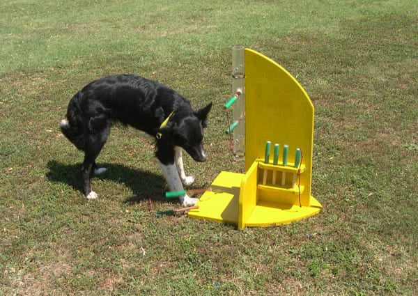 I giochi di attivazione mentale ti presento il cane for Recinto cani fai da te