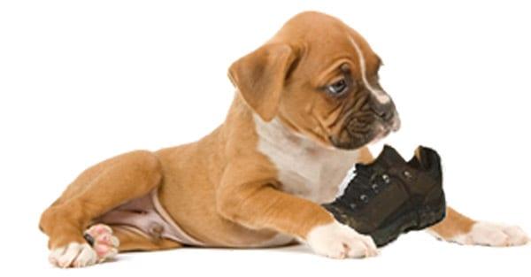 Educazione c 39 chi dice mai ti presento il cane for Educazione cane