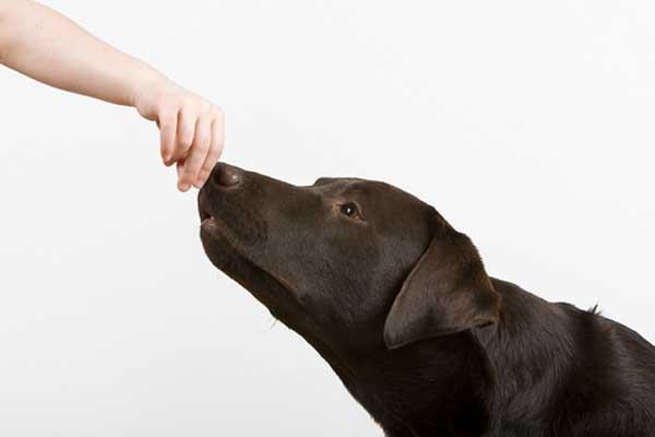 Aiuto mi ringhia quando il cucciolo fa sul serio e non - Quando fare il primo bagno al cane ...