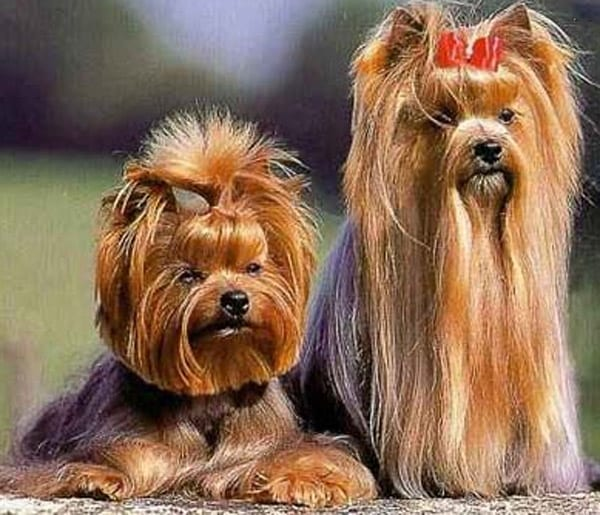 In realtà il cane impacchettato è un cane che si sente molto più libero di  correre (perché non inciampa nel pelo), di giocare e di fare \u201cil cane\u201d a  tutti
