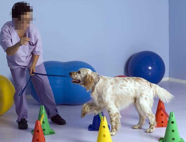 Come si riconosce un bravo educatore addestratore ti for Educazione cane
