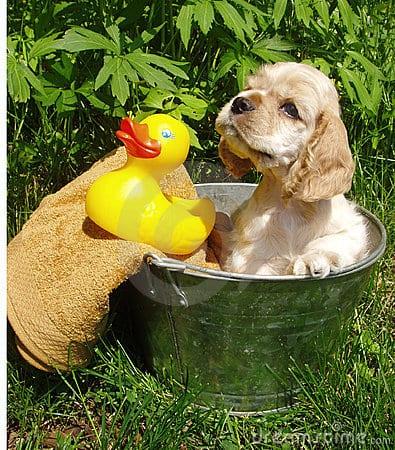 Il bagno solo dopo i sei mesi me l 39 ha detto miocuggino - Bagno cane dopo antipulci ...