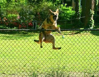 Recinzione Per Cani Giardino.Aiuto Il Mio Cane Scappa Ti Presento Il Cane