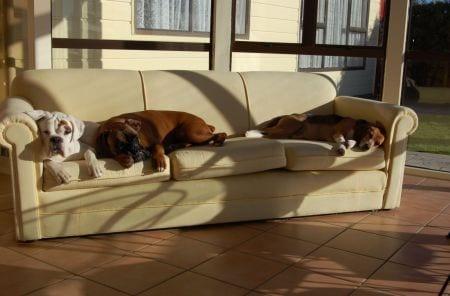 Quale cane in quale casa e con quale stile di vita ti for Divano per cani