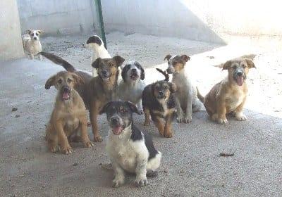 Voci dai canili i volontari educatori ti presento il cane - Portare il cane al canile ...