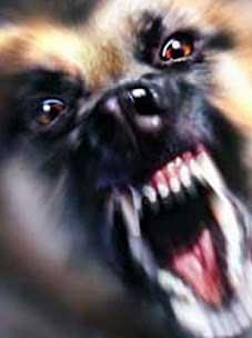 Come Farsi O Non Farsi Mordere Dai Cani Ti Presento Il Cane