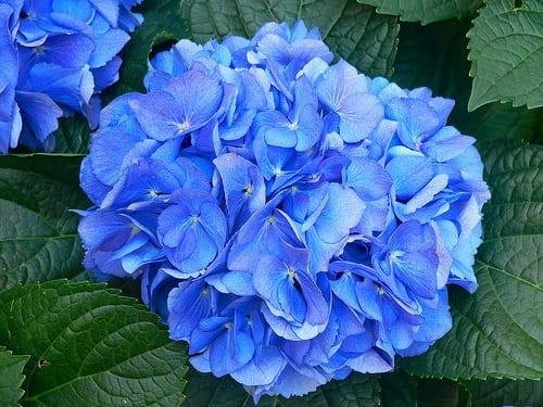 Primavera fiori piante e pericoli perch molte piante for Piante velenose per i cani