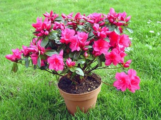 Primavera: fiori, piante...e pericoli, perché molte piante sono ...