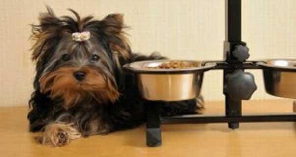 Aiuto Il Mio Cane Non Mangia Ti Presento Il Cane