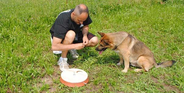 Il Mio Cane Mi Ha Ringhiato E Adesso Ho Paura Di Lui Ti Presento Il Cane