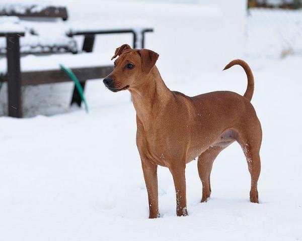 Il Cane Nella Foto A Destra, Per Esempio, Ha Una Coda Impeccabile: Però Ha  La Faccia Perplessa. Perché? Perché Sta Nella Neve, E La Cosa Non Lo  Entusiasma ...