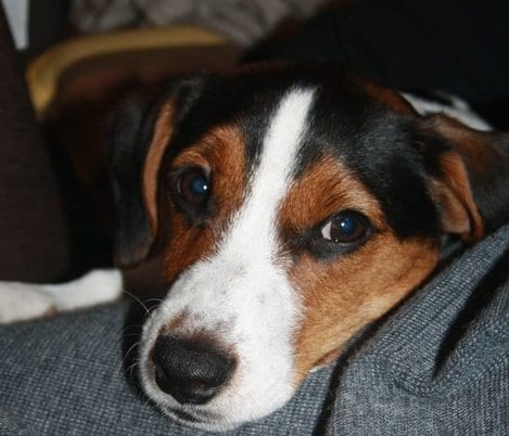 Favoloso Il Jack Russell: istruzioni per l'uso - Ti presento il cane ZZ27