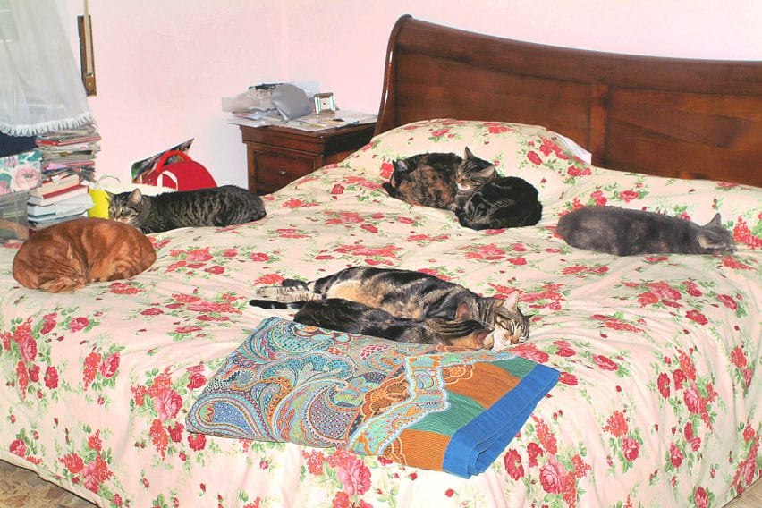 Cani e gatti nel letto pericolosi ti presento il cane - Giochi di baci sul letto ...
