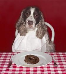 La Coprofagia Quando Il Cane Mangia Le Cacche Sue O Altrui Ti