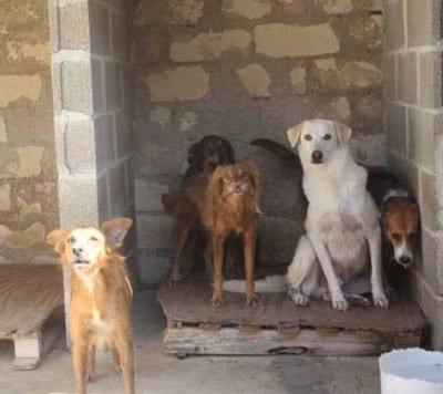 Quando non vengono adottati, siccome i volontari sono pochi ed hanno pochissimo tempo per socializzare i cuccioli, i cani diventano timorosi nei confronti dell'uomo. Per alcuni sarà ancora possibile rimediare, per altri sarà davvero difficile.