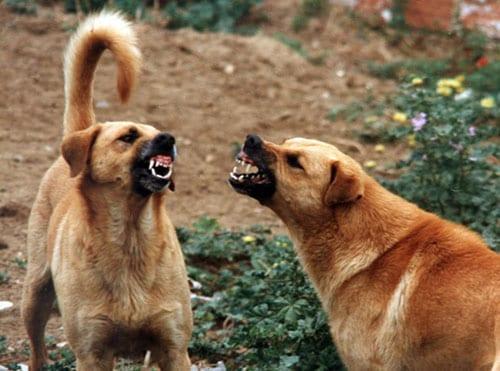 I Dieci Comandamenti Sulle Zufferisse Tra Cani Ti Presento Il Cane