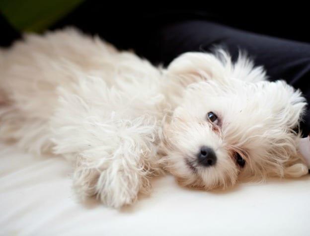 puppy_ronf