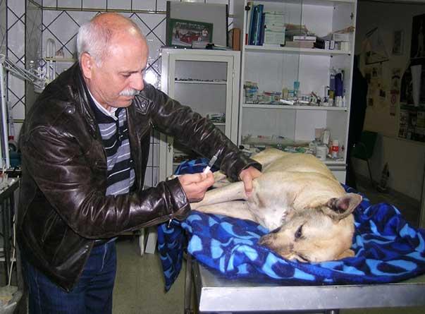 Il dottor Rametta cura il cane avvelenato