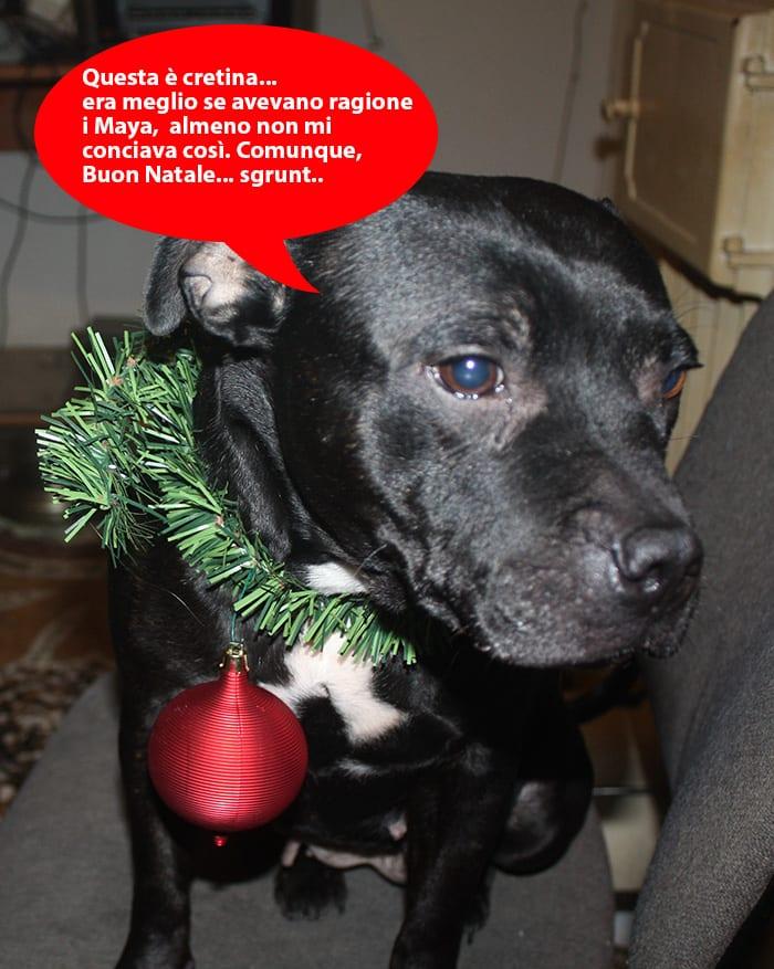 Foto Di Natale Con Cani.Buon Natale Ti Presento Il Cane