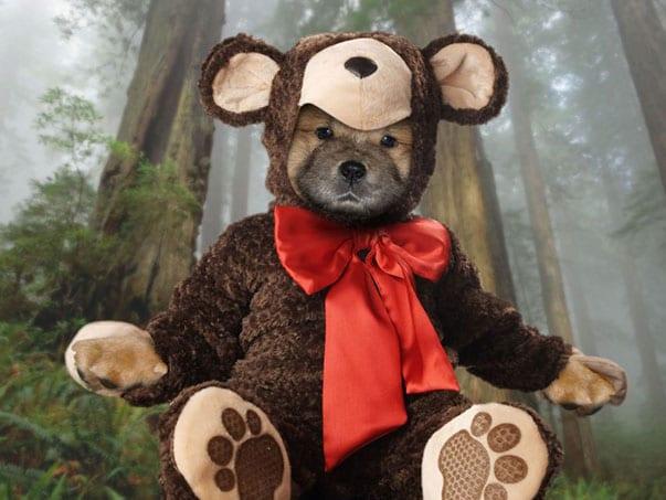 Chow-Dog-Teddy-Bear--66727