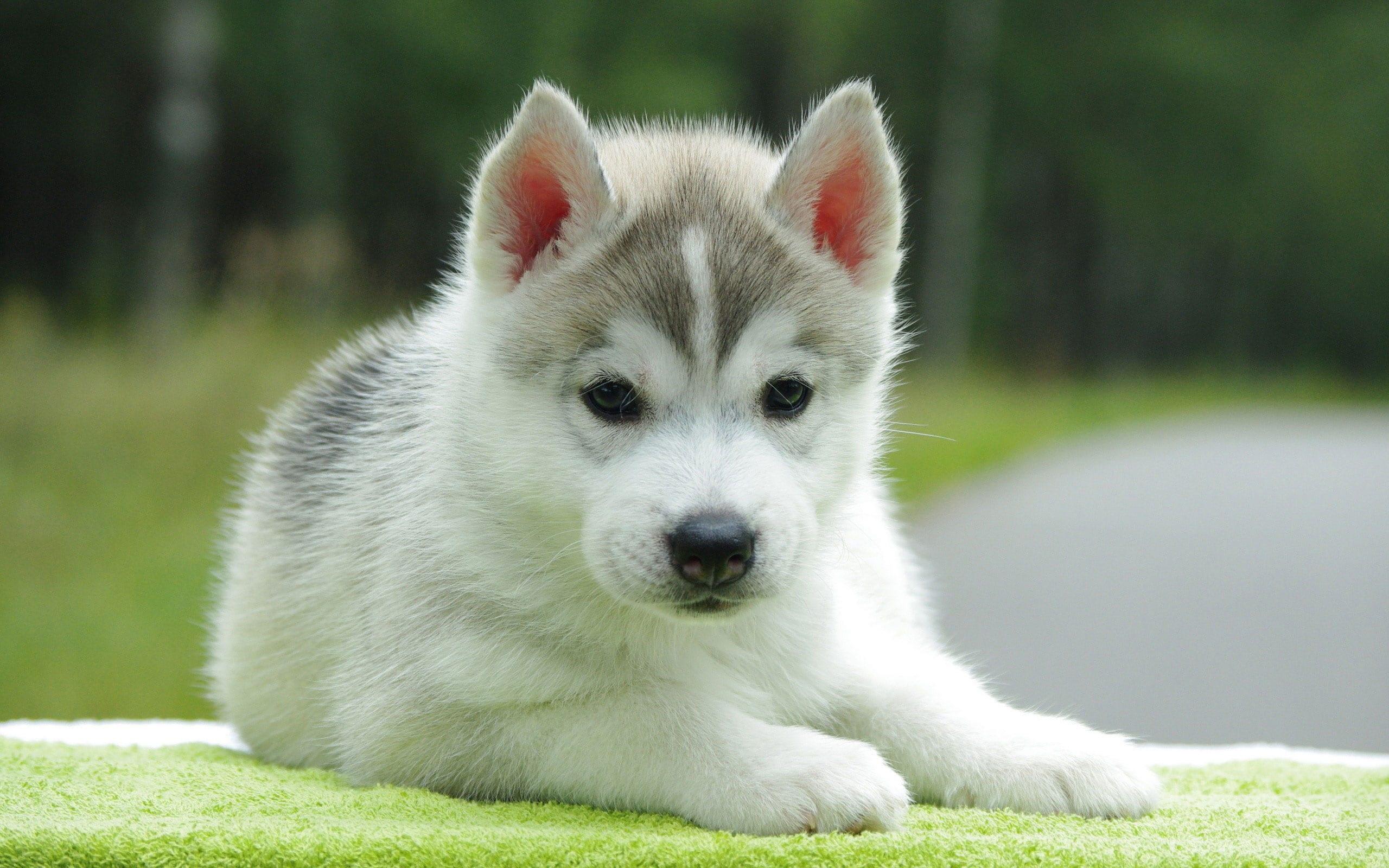adozione cucciolo cane – ikners