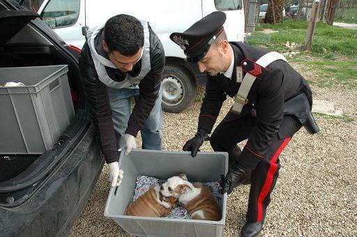 * Animali/ Da oggi in vigore nuove pene per chi li maltratta