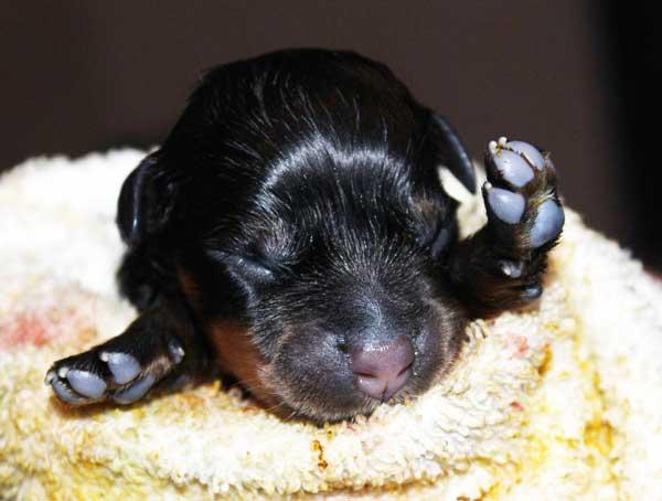 Cucciola-n.1-Penelope