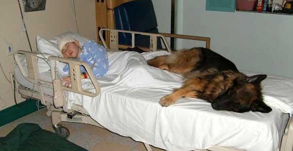 cane_ospedale