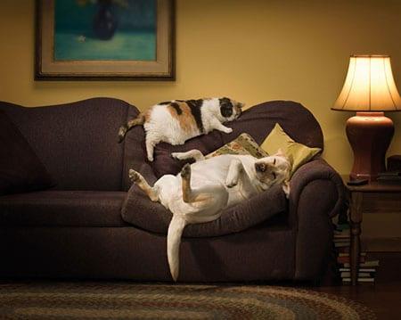 gatto-cane-casa-foto