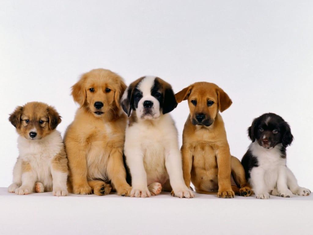 Mantenere la calma e coccolare il tuo cane Felpa con Cappuccio Felpa Con Cappuccio 12 Colori