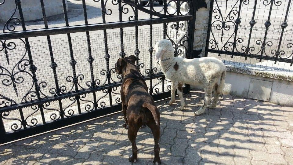 Amy e Molly fanno la guardia insieme!