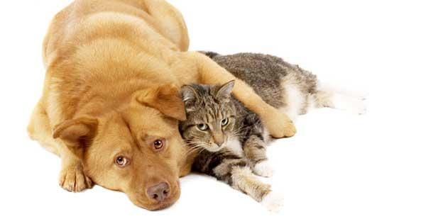 Cani Gatti Come Farli Andare Daccordo Anche Se Non Sono