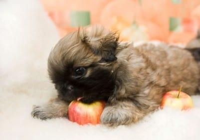 cucc mela