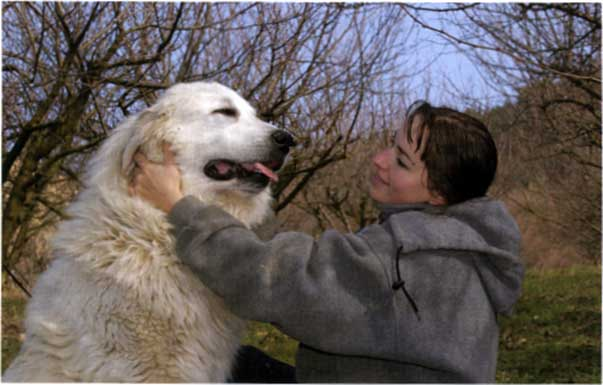 Alimentazione e disordini alimentari dei cani di taglia for Recinto per cani taglia grande