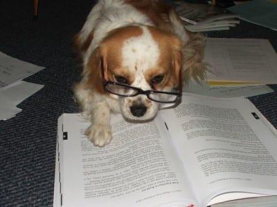 cane-legge-e-studia-con-gli-occhiali