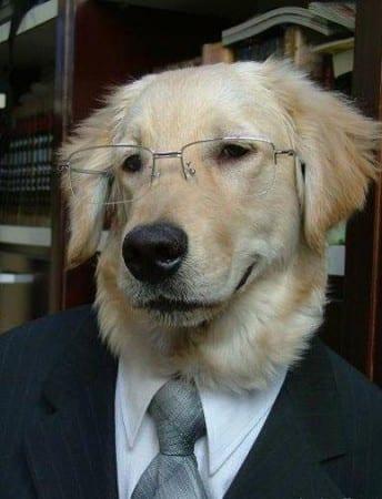 avvocato_cane